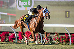 November 25, 2018: Flying Scotsman with Flavien Prat aboard wins the Cecil B Demille Stakes at Del Mar on November 25, 2018 in Del Mar, California. Evers/Eclipse Sportswire/CSM