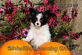 Bob, ANIMALS, REALISTISCHE TIERE, ANIMALES REALISTICOS, dogs, photos+++++,GBLA4280,#a#, EVERYDAY