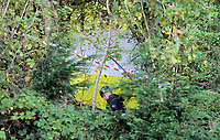 Pictured: Specialist Search Unit officers at the scene where the body of 15 year old Rebecca Aylward was discovered. Monday 25 October 2010<br />