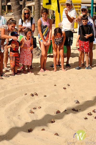 Westin Resort, St. John, USVI, Caribbean. Hermit crab races on beach.