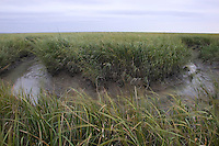 Bend in Saltmarsh Creek; Spartina alterniflora; NJ, Delaware Bay