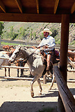 USA, Wyoming, Encampment, a wrangler gets ready to take a trail ride at a dude ranch, Abara Ranch