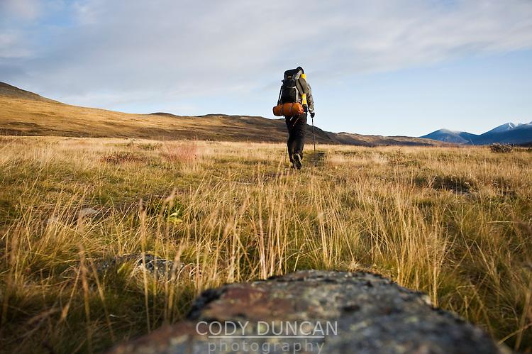 Single hiker hiking north through empty landscape in autumn on Kungsleden trail, Lapland, Sweden