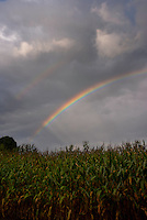 Intense rainbow over a cornfield in South Haven, MI