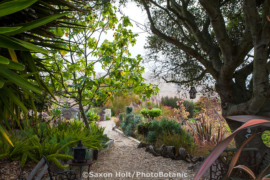 Path under Oak tree in California hillside garden;