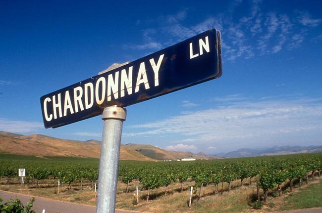 Street sign in vineyard in Santa Maria valley of California