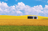 Grain bins, wheat and canola<br /> Bruxelles<br /> Manitoba<br /> Canada