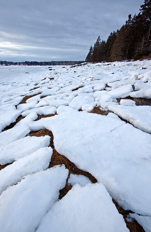 Pancake ice formations on Thompson Island along the shore of the Mount Desert Narrows, Acadia National Park, Maine, USA