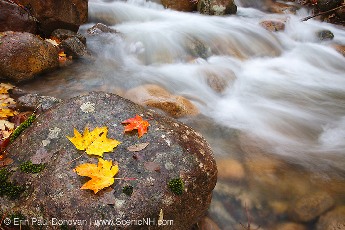 Hellgate Brook during the autumn months in the Pemigewasset Wilderness of Franconia, New Hampshire USA.