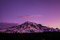 Mt. Rainier in purple