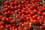 Cherry Tomatoes, Cherry Tomatoes on the vine, NYC