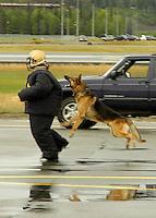 Working dog demo at Elmendorf Air Force Base, Alaska.