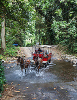 Visitors in a red wagon drawn by horses tour Waipi'o Valley on the Big Island.
