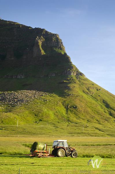 Hay Making, Grundarfjordur, West Fjords, Iceland