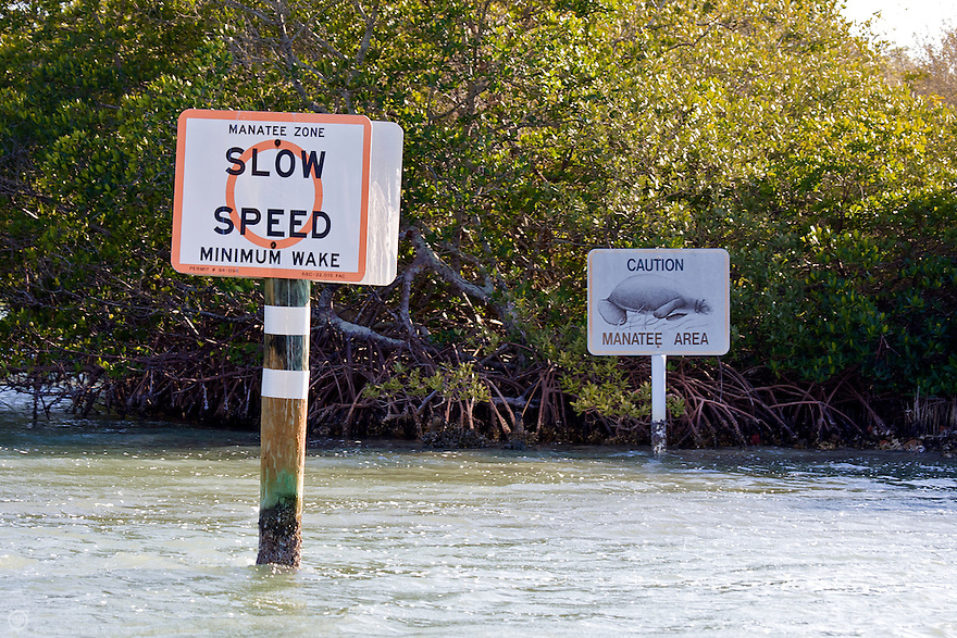 North America, USA, Florida, Gasparilla Sound. Manatee warning signs on waterway in Florida.