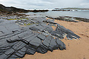 Slate outcrop, Constantine Bay, Cornwall, UK. May.