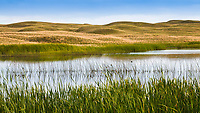 Surface water ponds from Ogallala Aquifer, Merz Ranch, Sand Hill Prairie, Nebraska