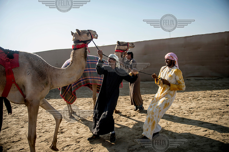 After a race, wranglers try to calm their camels.