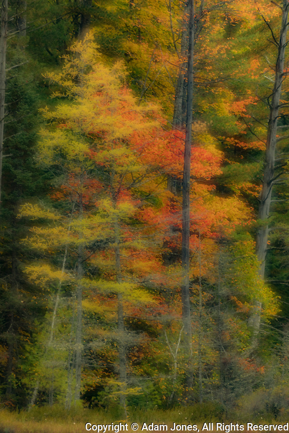 Soft focus effect on autumn trees, Upper Peninsula of Michigan.