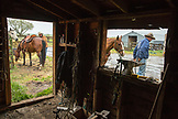 USA, Oregon, Enterprise, Cowboys Todd Nash and Cody Ross unsaddle their horses at the Snyder Ranch after a long day of moving cattle in the rain, Northeast Oregon