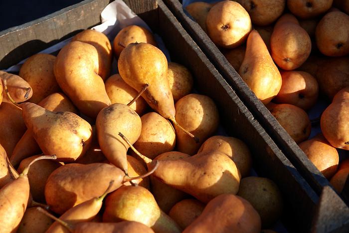 Fresh  organic Russett pears