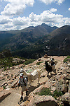 Guide hikes with pack llamas over Flattop Mountain in Rocky Mtn. NP on the way to crossing the Continental Divide on a summer day in July, high in the Colorado Rocky Mountains