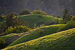 Green hills in spring, Russian Ridge Open Space Preserve, Santa Cruz Mountains, San Mateo County, California