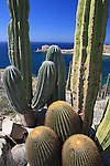 giant barrel cacti and Cardon, Isla Santa Catalina