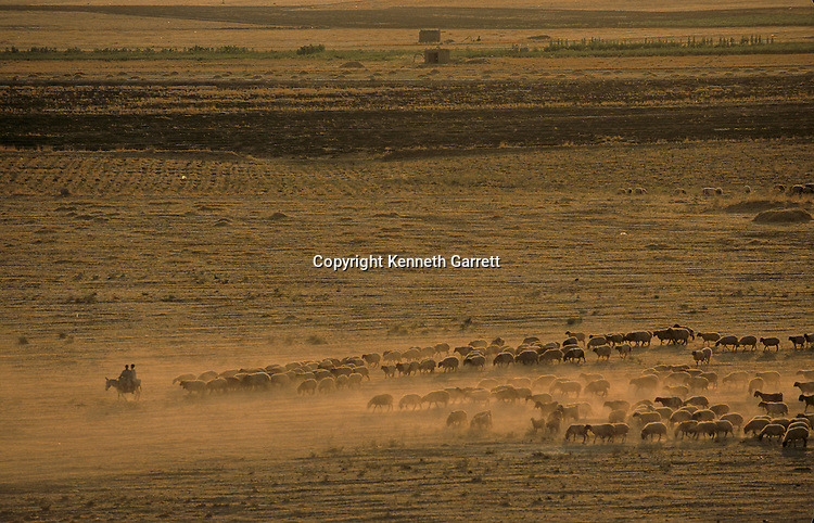 Urkesh, Hurrian Empire, Syria, 2400 BC, Giorgio Buccellati, pasture land