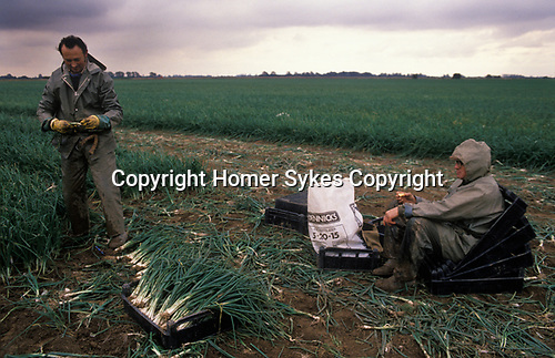 Rural low paid farm work the Fens, East Angelia. 1980s UK