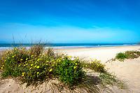 Spanien, Andalusien, Provinz Cádiz, Chiclana de la Frontera: Strand an der Costa de la Luz   Spain, Andalusia, Province Cádiz, Chiclana de la Frontera: beach at Costa de la Luz
