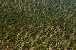Miombo woodland, western Zambia