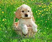Marek, ANIMALS, REALISTISCHE TIERE, ANIMALES REALISTICOS, dogs, photos+++++,PLMP3156,#a#, EVERYDAY