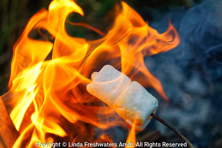 Roasting marshmallows over a summer campfire.