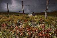Europe/France/Auvergne/63/Puy-de-Dôme/Parc Naturel Régional des Volcans/Massif des Monts Dores: Le col de la Croix Saint Robert (1426 mètres) et pâturages
