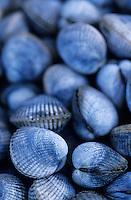 Europe/France/Bretagne/56/Morbihan/Quiberon/Port-Haliguen: Coques sur le marché