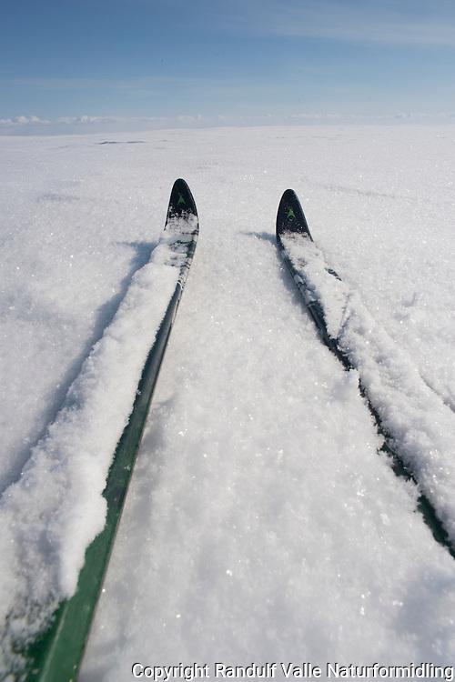 Vårskitur i Øvre Anarjohka nasjonalpark. ---- Spring skiing trip in Øvre Anarjohka national park.