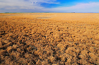 Lentils. Red<br /> Corinne<br /> Saskatchewan<br /> Canada