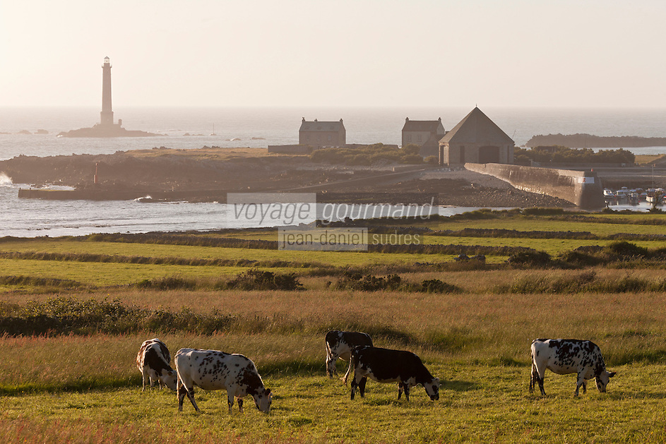 Europe/France/Normandie/Basse-Normandie/50/Manche/Presqu'île de la Hague/Goury: le port  et le phare du Cap de la Hague  et vaches normandes en paturage
