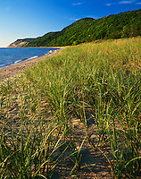 Sleeping Bear Dunes National Lakeshore, MI<br /> Beach grasses under forested dunes and Empire Bluffs above Lake Michigan
