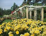 7212-EP(OC) Rose Garden, Sun Flare Roses, Arbor w/ climbing roses, at Huntington Gardens, San Marino, CA USA.