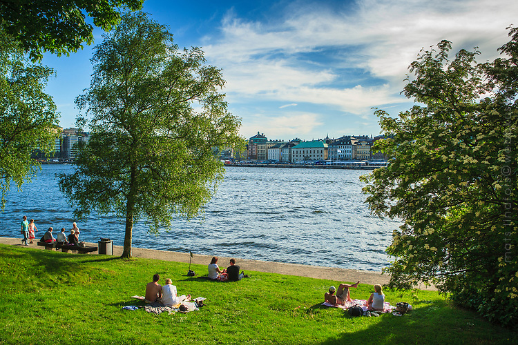 Männsikor på gräsmatta Skeppsholmen Stockholms ström Stockholm