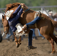 A cowboy trys to free his hand from after bucking a bareback bronc during the Miles City Bucking Horse Sale at the Eastern Montana Fairgrounds in Miles City Montana Sat., May 19, 2007. Saddle broncs and bareback broncs are auctioned off after they are bucked.