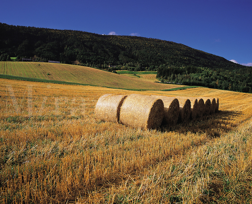 Round straw-bales in a field after the harvest, low dark hills behind, in Ottadale, Norwa