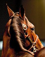 Quizzical horse