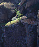 USA, California, A tree on the edge of a cliff in Pinnacles National Monument