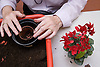 Older person potting on a cyclamen plant in a Thrive gardening workshop for visually impaired people visiting the NRSB,  The use of red boxes help visually impaired people such as those with macular degeneration,