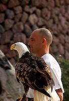 Spanien, Kanarische Inseln, Teneriffa, Weißkopfadler im Parque Las Aguilas de Teide