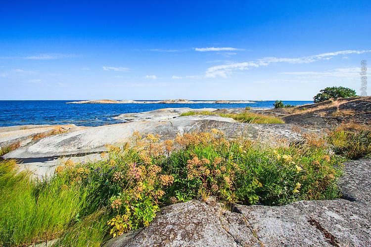 Hällar och blommor på Finnskär vid havet i Stockholms skärgård/ Stockholm archipelago Sweden