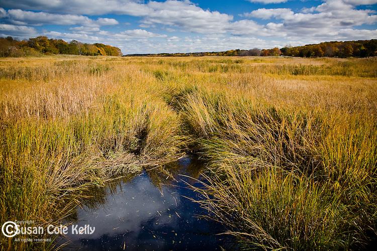 Autumn colors the cord grass at Quivet Creek in Dennis, Cape Cod, MA, USA